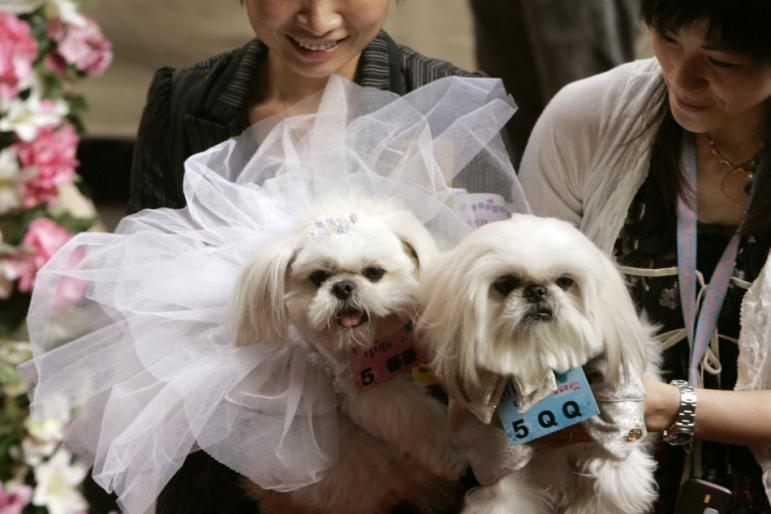 Dogs dressed as a bride and groom take part in a wedding ceremony for pets as part of Valentine's Day celebrations at a shopping mall in Hong Kong