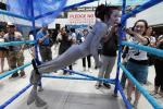 Chinese Americans Divided Over Ban of Shark Fin Soup in California