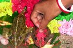 Indian woman puts vermilion on female toad during traditional Hindu wedding ceremony between two ...