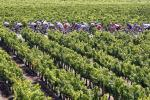 France set to overtake Italy as top wine producer