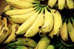 How Climate Change Is Threatening Global Banana Production