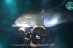 Divers Help Dolphin Out Of Tangled Line [VIDEO]
