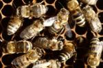Thousands Of Bees Escape Tractor Trailer Truck In New Jersey