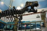 T. Rex On Furlough, Brand-New 'Space Race': The Week In Science