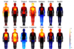 Mapping Emotions In The Human Body
