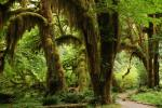 Rainforest-Trees-Landscape-Green-Nature-Forest-1367681