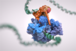 dna-image-rna-polymerase