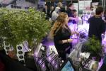 Cannabis Trade Show