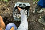 Collecting crocodile eggs is a risky business