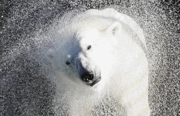Global Warming is 'Shrinking' Animals: Research