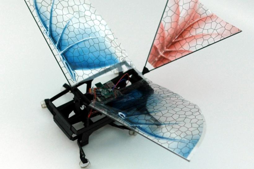 Robotic Winged Bug Sheds Light On Evolution of Flight