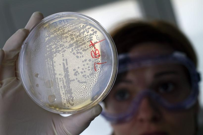A laboratory worker looks for strains of E.coli bacteria in vegetable cells placed in a petri dish, in La Mojonera.