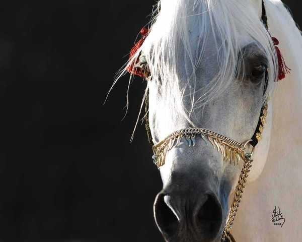 Horse Slaughter Approved for U.S.
