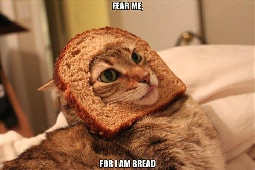 http://s1.ibtimes.com/sites/www.ibtimes.com/files/styles/v2_article_large/public/2012/01/31/224066-breading-cats.jpg