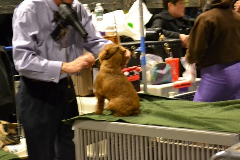 Westminster Dog Show Behind-the-Scenes