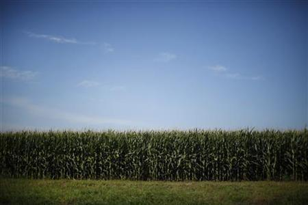 GMO Controversy Takes Center Stage In The US