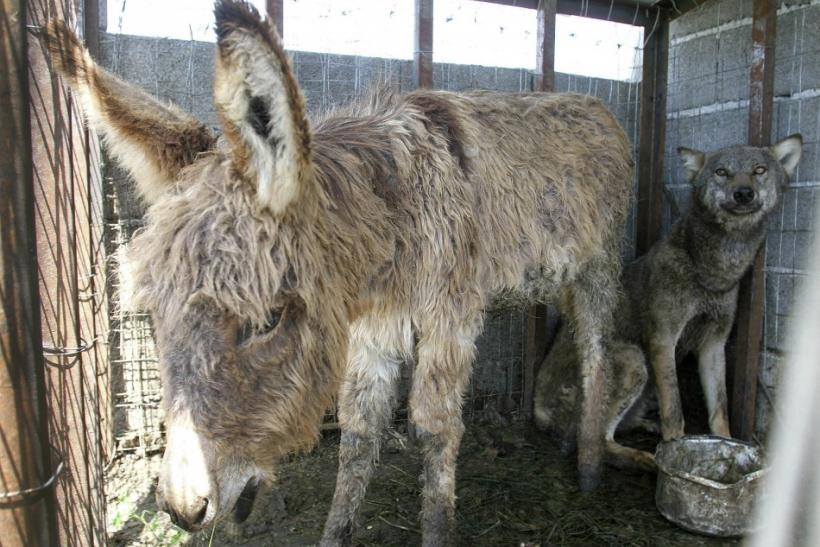 Abandoned Donkeys