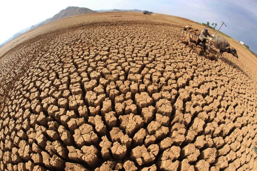 Drought Ridden Farmland