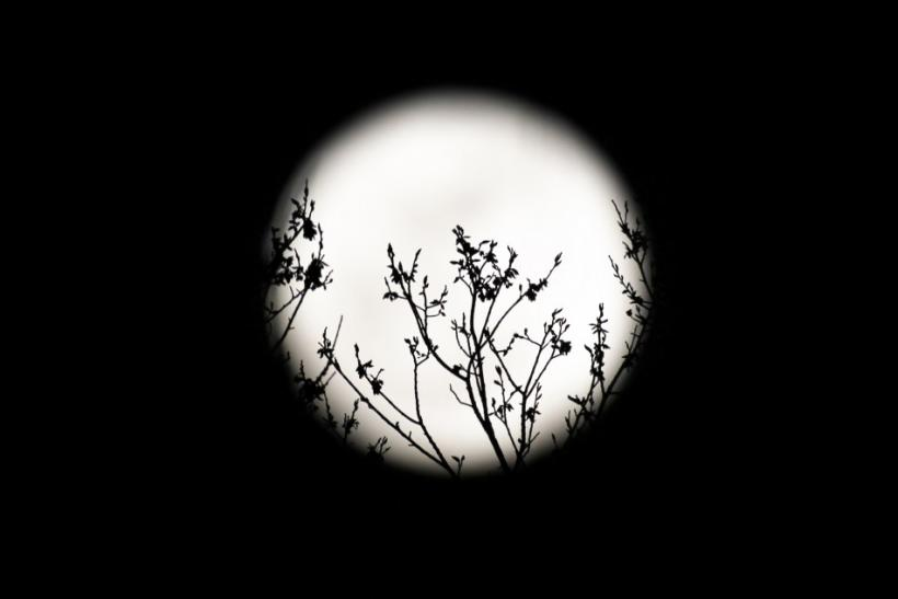 Spring buds are silhouetted against the rising full moon in Washington
