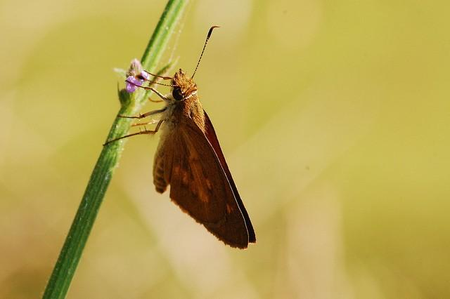Moth At Rest