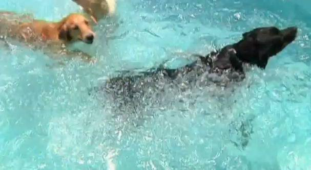 A picture from a Dog Swimming Pool Meant Exclusively for Dogs
