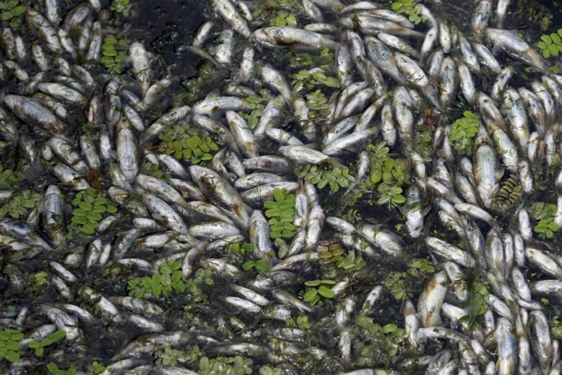 Thousands of fish have been found dead
