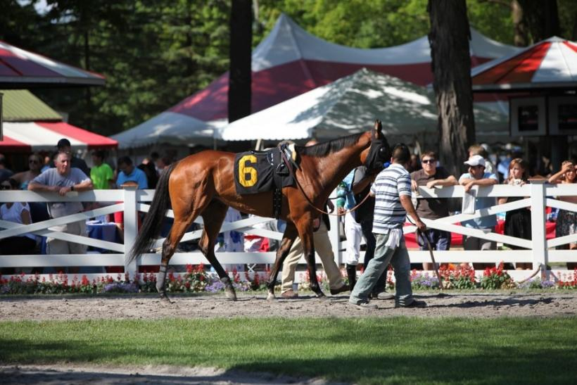 A horse runs on the track during opening weekend at the Saratoga Race Course.