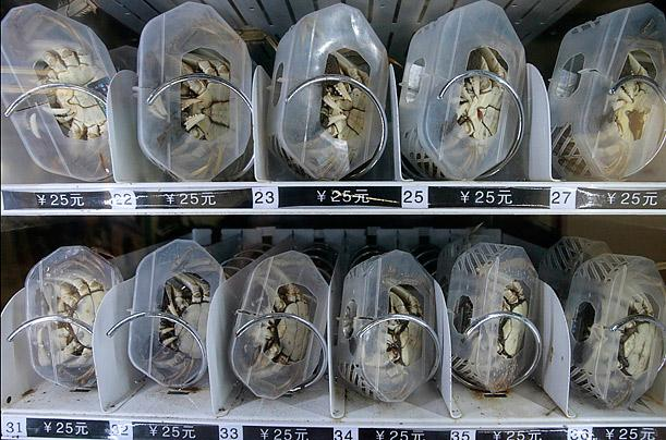 Live Crab Vending Machine