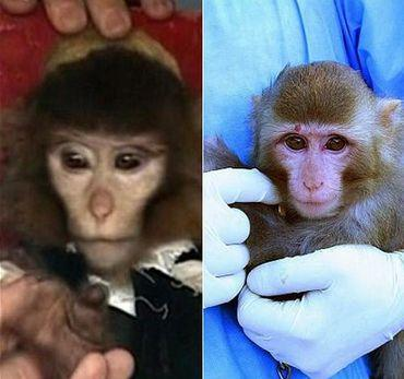 Iran's Space Program Denies Monkey Hoax