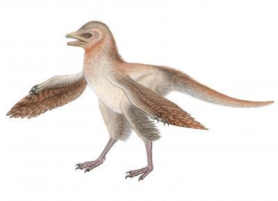 New Feathered Dino Complicates Bird Origins