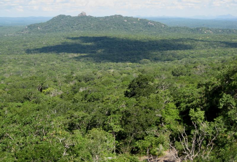 Mozambique Forest