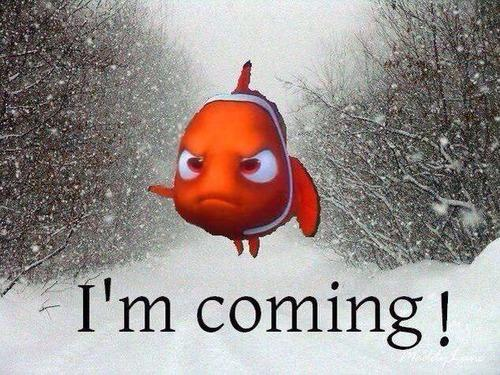 Winter Storm Nemo