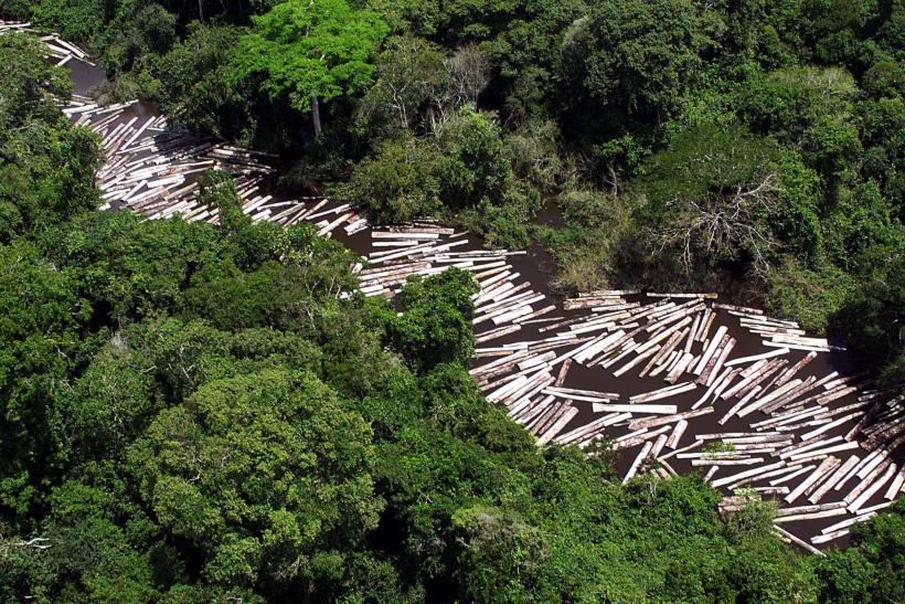 Brazil Amazon logging