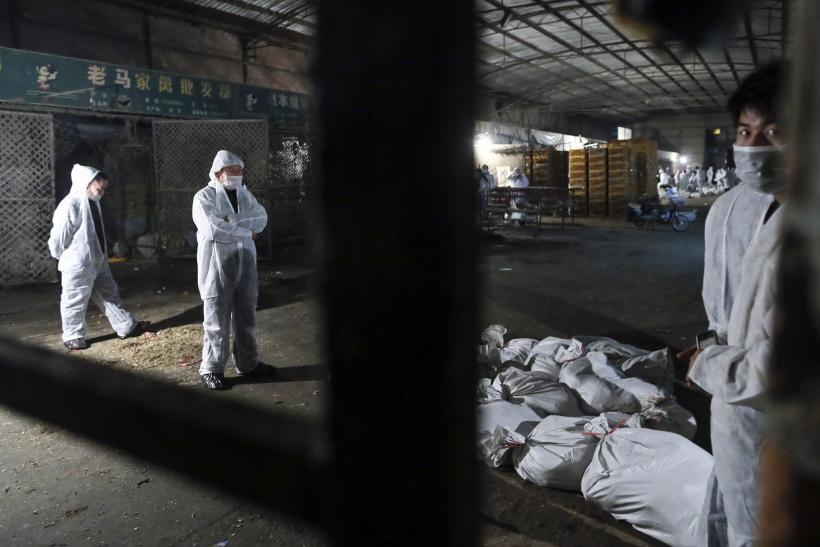 China Bird Flu