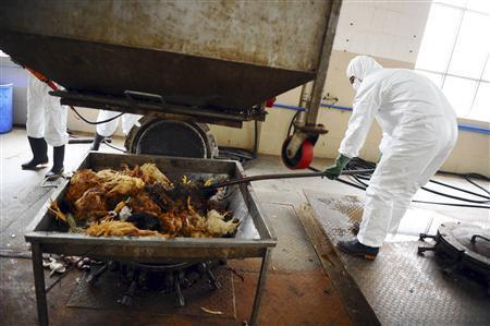 bird flu china