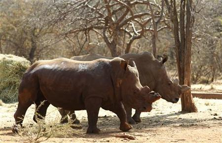 Rhinos Poached To Extinction In Mozambique Park
