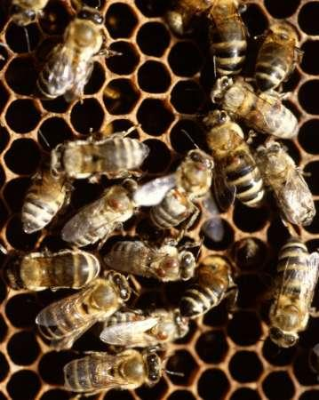 40,000 Bees Found In Couple's Bedroom