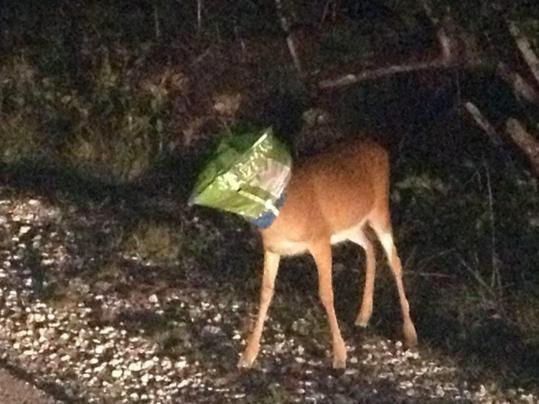 Doritos Deer