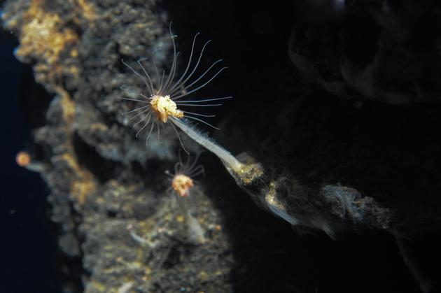Volcano Species Discovered