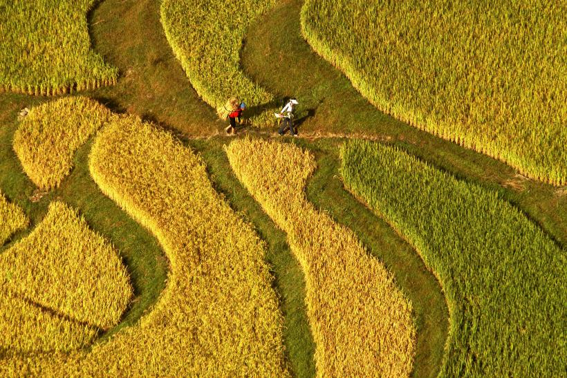 China farmland