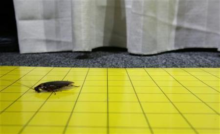 Millions Of Cockroaches Infest Chinese Town