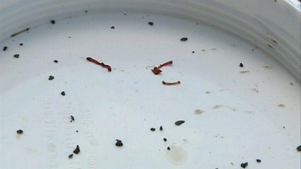 Oklahoma blood worms