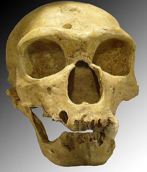 'Mystery Man' Interbreeding Among Ancient Human Species