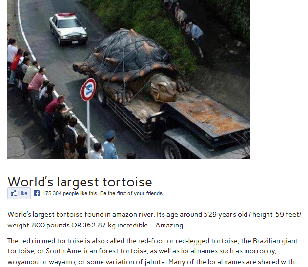 world�s largest tortoise fake image depicts 800pound
