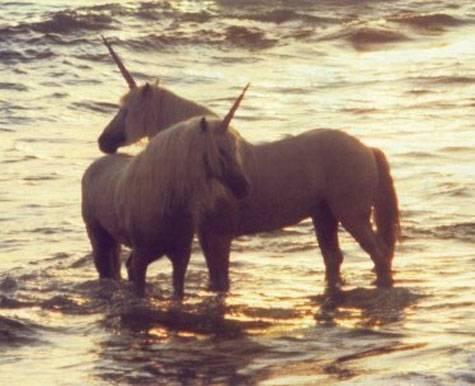 Pictures Of Real Life Unicorns The purebred unicorns