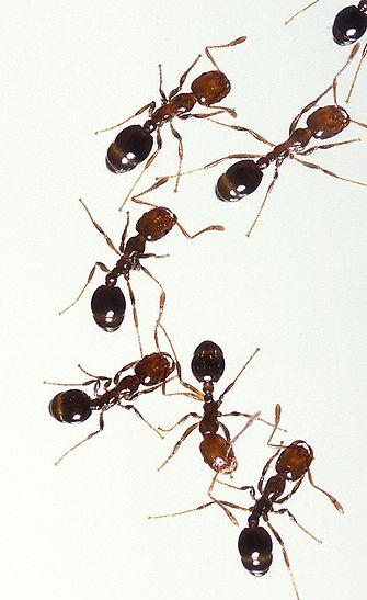 NASA Sends 800 Ants To Space To Study Behavior In Low-Gravity