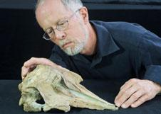 Ancient Dolphin Fossil Found In New Zealand