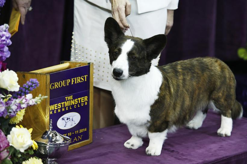 Westminster Dog Show 2014