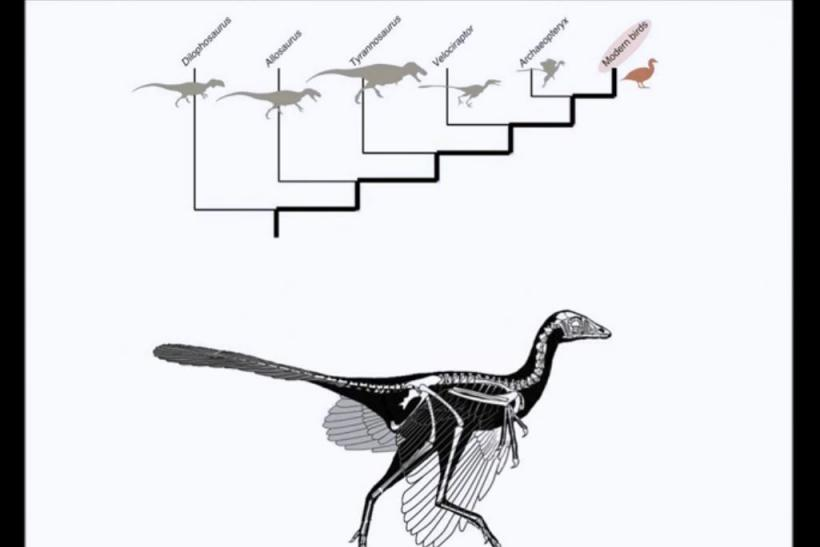 Dinosaur_birds_evolution