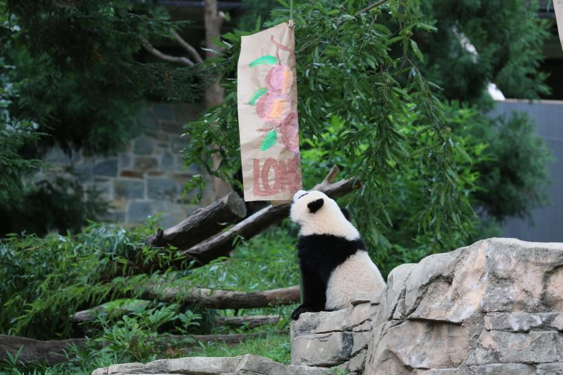 Bao Bao birthday